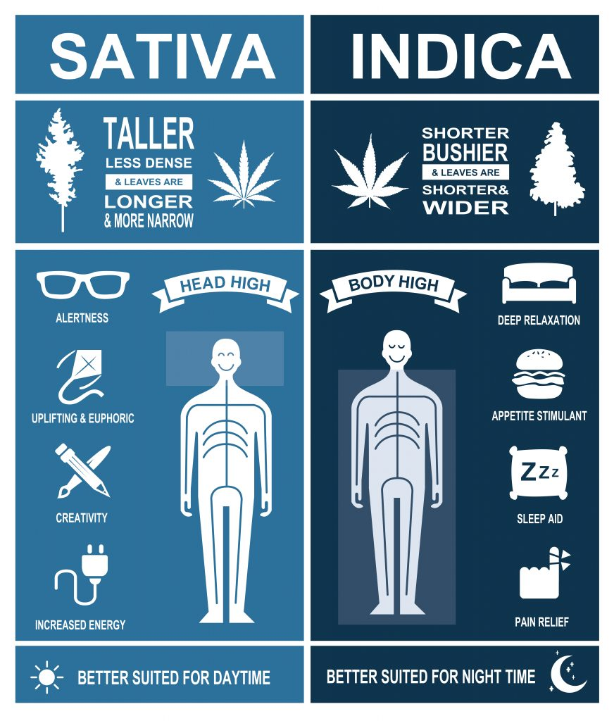 Sativa vs indica photo