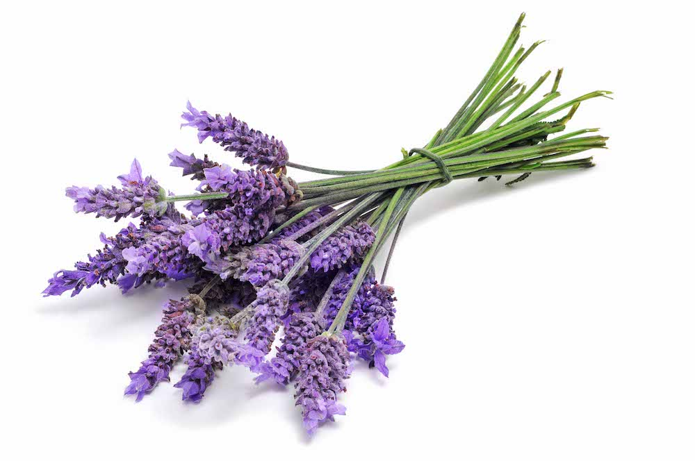 Lavender in a joint photo