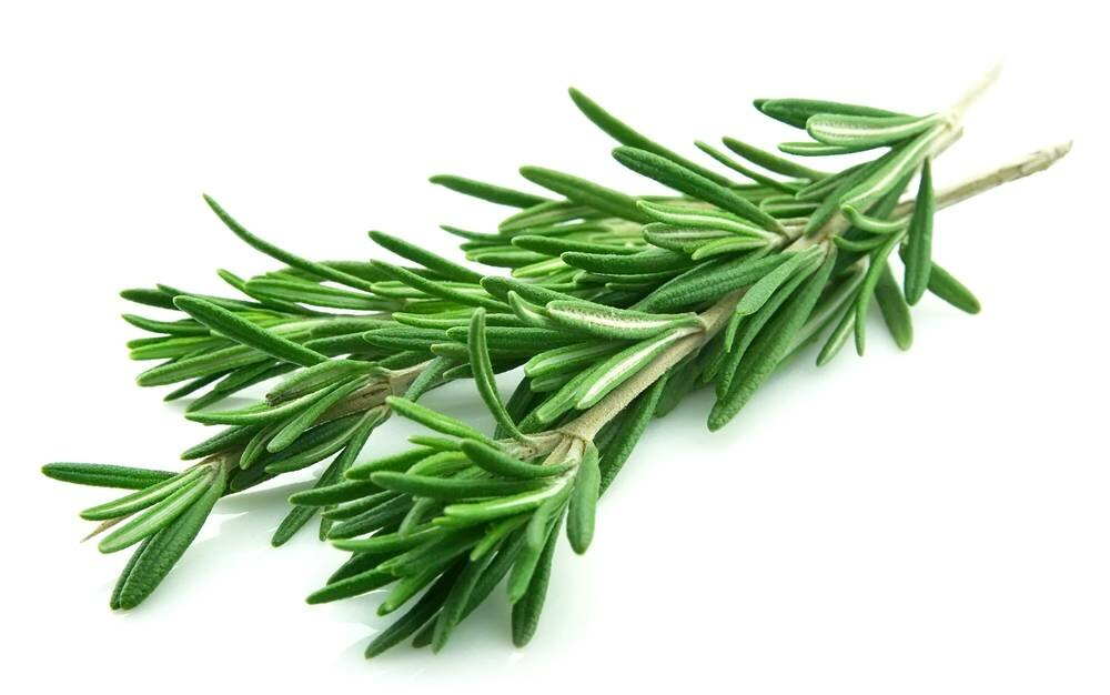Rosemary in in a joint photo