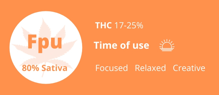 Cannabis sativa strains Fruit Punch THC 17-25% photo