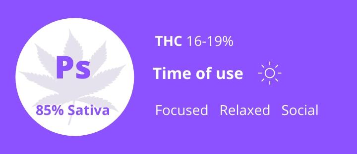 Cannabis sativa strains Purple Skunk THC 16-19% photo